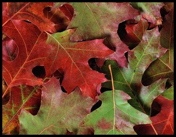 Les feuilles d'automne 01a22c69