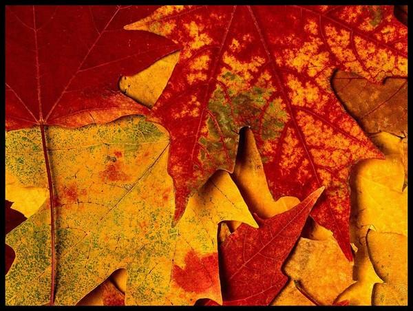 Les feuilles d'automne 083194bd