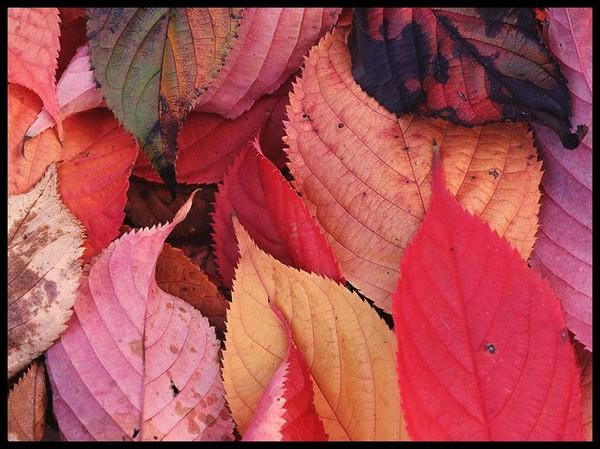 Les feuilles d'automne 0f951a6c