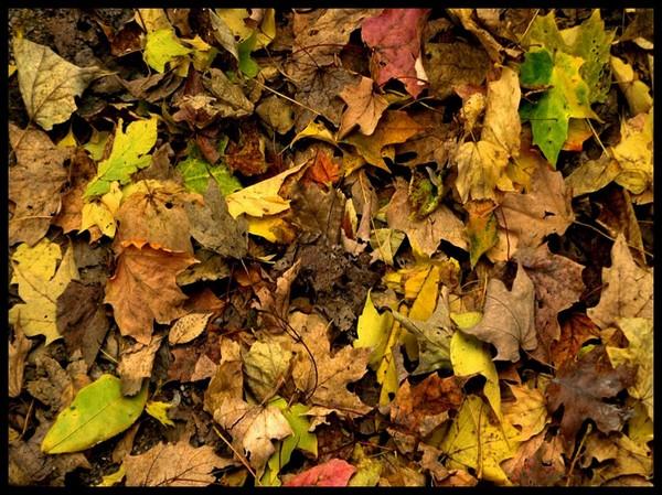 Les feuilles d'automne 5cbecde8