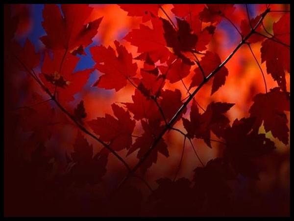 Les feuilles d'automne 737d1f10