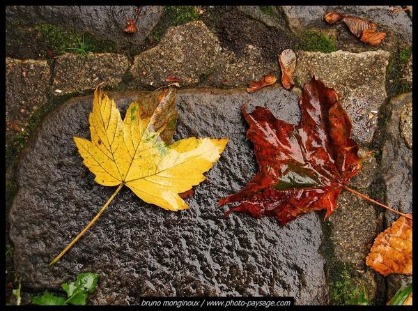 Les feuilles d'automne 7ac72fe8