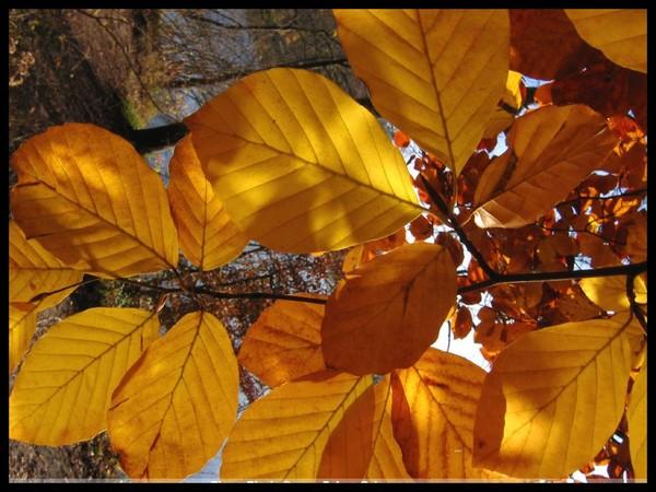 Les feuilles d'automne 9ee81162