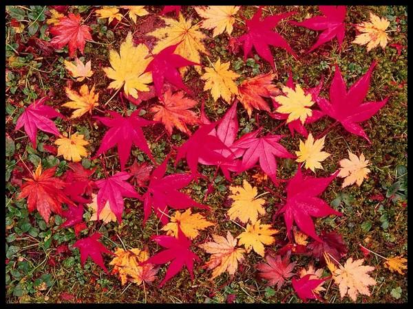 Les feuilles d'automne Bb2b6e1f