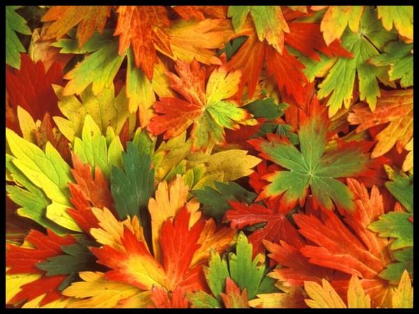 Les feuilles d'automne Cd77205b