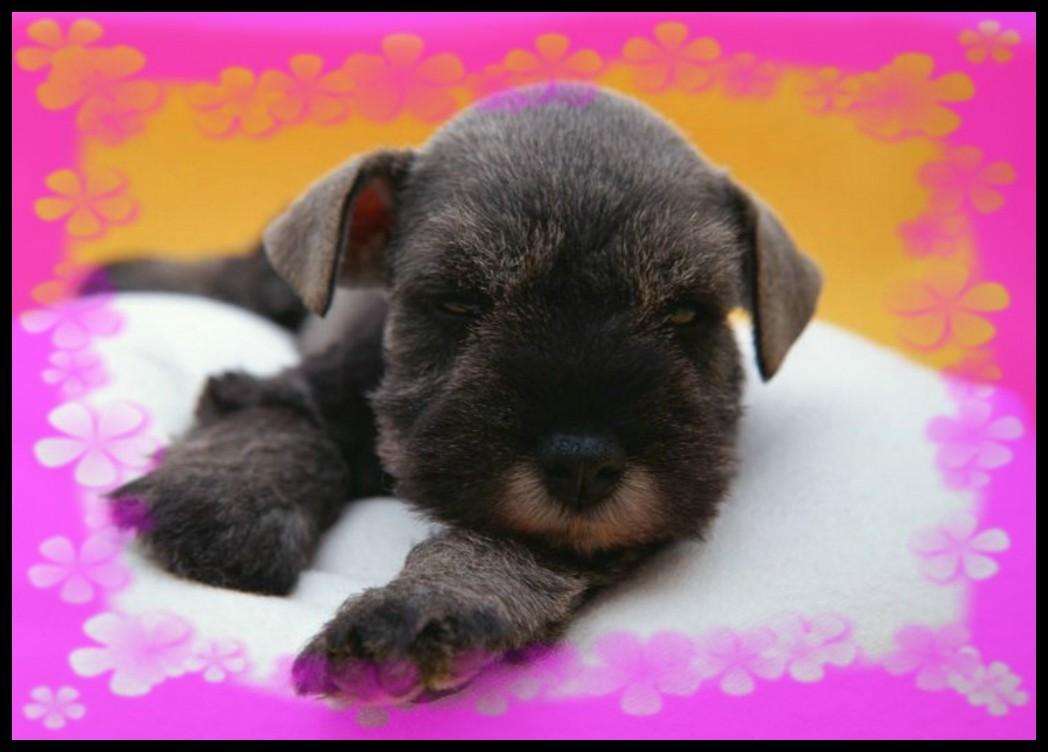 Beaux bebe chien du net - Image bebe chien ...