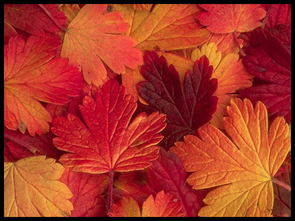 Couleurs d automne feuilles page 2 - Image feuille automne ...