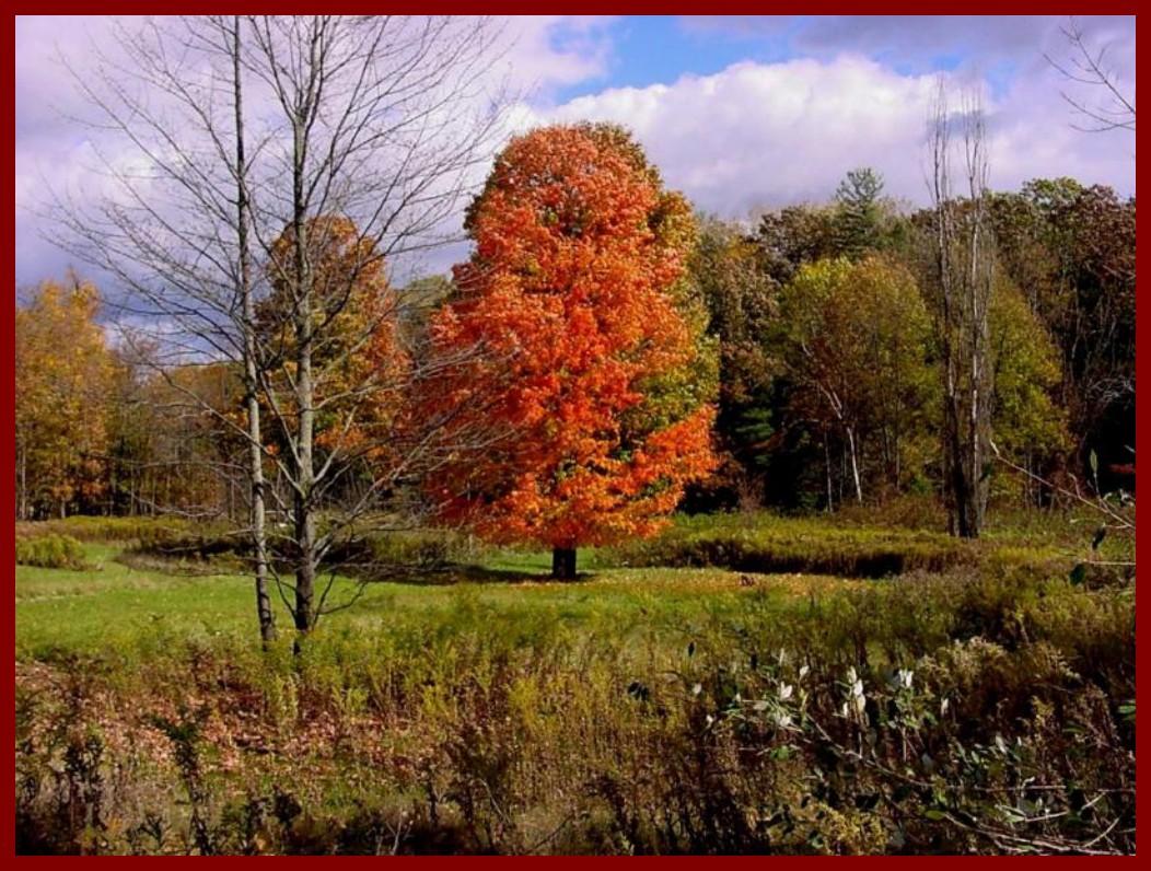 Couleurs d automne - Images d automne gratuites ...