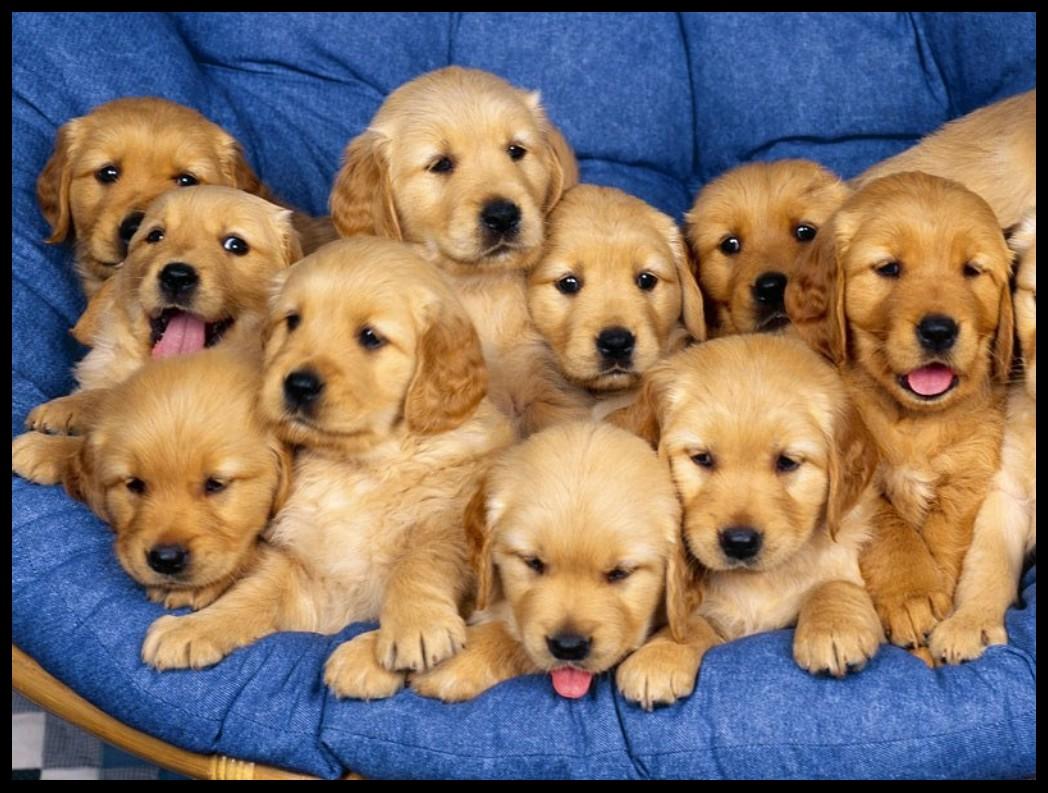 Bebe chiens - Image bebe chien ...